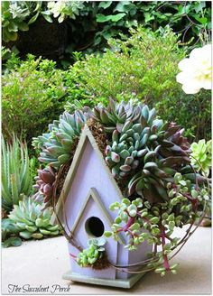 Birdhouse, succulents planted on roof