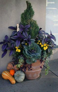Autumn container garden with ornamental cabbage (edible)