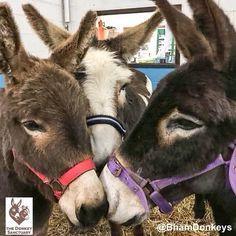 Embedded image photo courtesy of the Donkey Sanctuary via Twitter