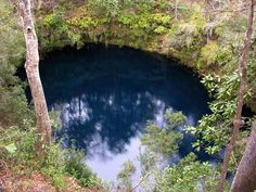 Big Dismal Sink - Leon Sinks Geological Area (Apalachicola National Forest) [Leon County]