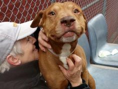 TO BE DESTROYED - 04/21/14 Manhattan Center -P  My name is COPPO. My Animal ID # is A0996399. I am a male tan and white pit bull mix. The shelter thinks I am about 5 YEARS old.  I came in the shelter as a OWNER SUR on 04/12/2014 from NY 10457, owner surrender reason stated was PERS PROB.