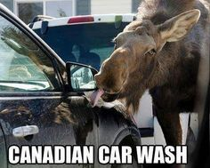 Funny pictures about Cars are washed differently in Canada. Oh, and cool pics about Cars are washed differently in Canada. Also, Cars are washed differently in Canada. Funny Shit, Funny Car Memes, Car Humor, The Funny, Funny Stuff, Funny Things, Funny Cars, Funny Quotes, Random Stuff