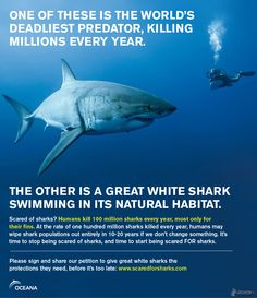 Scared of sharks? Don't be -- when it comes down to it, WE are the ruthless predators in the sea