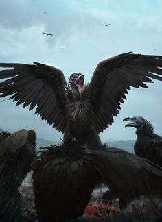 Cinereous Vulture: (painting?)