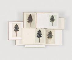 Trees / via Convoy