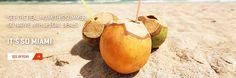 Miami Coconuts