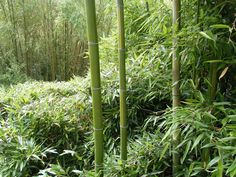 Paris, sus parques, jardines y bosques....Bambú en el Parc de la Villette