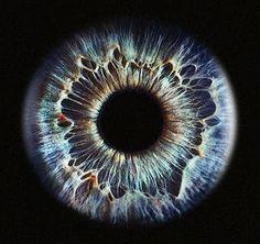 Iris | #eyes