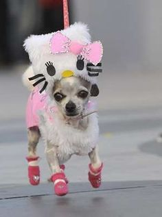 Hello Kitty - Dog or Cat ? ;)