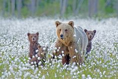 young bear with mom