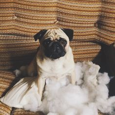 #guiltydog