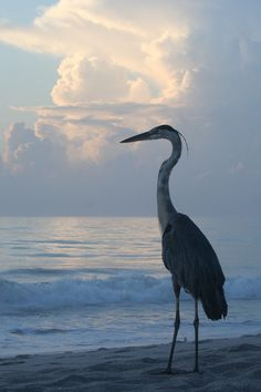 """Heron Taking in the Sunrise"" ~ Photography by leisakay3"