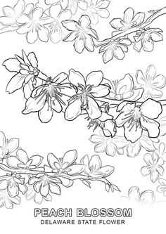 Click The Delaware State Flower Coloring Pages To View Printable Version Or Color It Online Compatible With IPad And Android Tablets