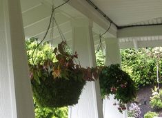 Drip Feed Watering is Ideal for Hanging Baskets