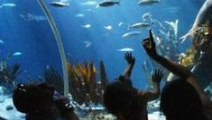 HOT Sea Life Coupon Take advantage of this Sea Life coupon for Grapevine…a great deal just in time for Spring Break too! Go here and sign in get a coupon for a RARE and exclusive buy one, get one free […] Bogo Coupons, Free Coupons, Admission Ticket, Free Deals, Buy One Get One, Spring Break, Grape Vines, Fossil, Sea