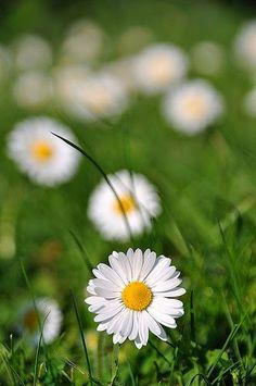 Flower Photography– Сообщество– Google+