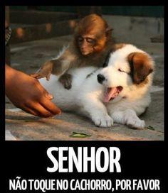 Senhor Não toque no cachorro, por favor.