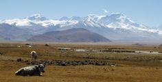 tibetská náhorní plošina - Hledat Googlem