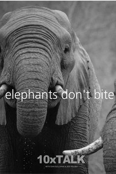 Have you ever been stung by a bee? Have you ever been bitten by an elephant? It's the little things that get you. Learn why in this episode – Elephants Don't Bite