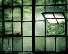 Love the old industrial windows contrasted with the lush green outdoors. Window View, Open Window, Window Panes, Wabi Sabi, Through The Window, Looks Cool, Windows And Doors, Front Doors, Abandoned Places