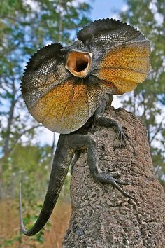 One awesome lizard