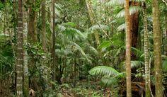Eungella rainforest