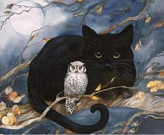 The Cat & The Owl