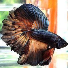 "Aquariums & Tanks Pet Supplies Obedient Fish Bowl Glass Canteen Style Goldfish Betta Approx Half Gallon Size 7"" High"