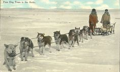 Photograph of postcard of prize dog team in the Arctic | Flickr - Photo Sharing!