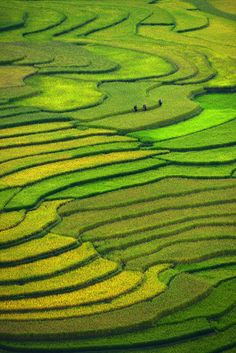 Terraced fields by sarawut Intarob (Vietnam)