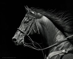 """American artist Cathy Sheeter creates realistic scratch drawings on ink coated boards. """"Many people can't believe that my very realistic animal artwork is created just… Art Scratchboard, Hyperrealistic Drawing, Angel Artwork, Horse Sketch, Portraits, Realistic Drawings, Equine Art, Horse Art, Drawing Techniques"""