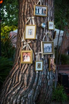 Backyard Wedding family photo tree / http://www.deerpearlflowers.com/wedding-photo-display-ideas/