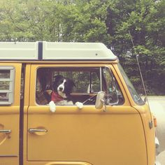 @Andy Knapp | The Top 10 Dogs of Instagram - Yahoo! Shine