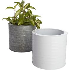 Give everyone green envy with modern planters and garden pots. Shop indoor and outdoor plant holders such as hanging pots, rail planters and more. Herb Planters, Modern Planters, Garden Pots, Planter Pots, Garden Ideas, Fuel Juice Bar, Photo Centerpieces, White Plants, Unique Gifts For Women