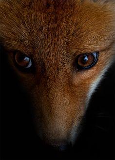 Fox, Hungry Eyes by =Skia on deviantART