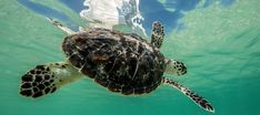 Sea Turtle Rehabilitation at Burj Al Arab | Jumeirah
