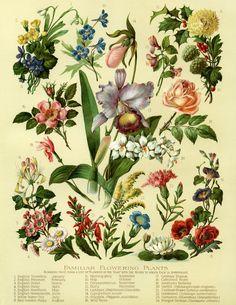 The Old Design Shop: vintage flowers
