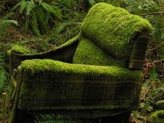 Moss chair. Not sure I could let nature take over upholstered furniture this way...