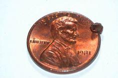 Mini-Frosch auf Münze: In Borneo haben Wissenschaftler die kleinste bekannte...