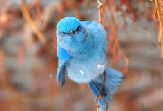 Ferocious Blue Bird by Kevin Casey Fleming on Flickr.