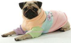 Hiddy pastel sweater pug