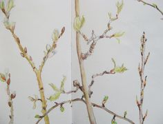 Spring Buds. Sketchbook drawing by Lisa Toppin.