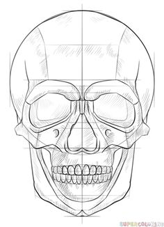 How to draw a human skull step by step. Drawing tutorials for kids and beginners.
