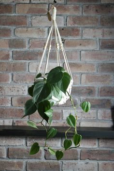 The Olive Robin - Directory - The Make It Collective. The Olive Robin shop is all about contemporary macramé creations. By blending traditional techniques with modern elements my aim is to create items which look great in any space. #macrame #handmade #australianmade #hangingplants