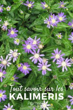 726 Meilleures Images Du Tableau Plantes Jardin Tout Savoir Et