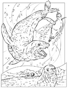 christmas in hawaii coloring pages | National Geographic Coloring Book: Leopard Seals Picture