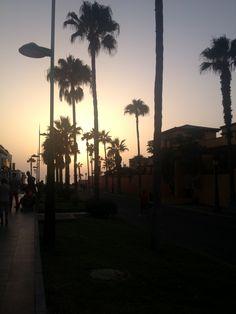 Tenerife #summer #beach #palmier #coucher #de #soleil #sun #palm #tree