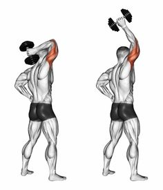 Exercise Database - Triceps — Jase Stuart - The Better Body Coach Fitness Workouts, Gym Workout Tips, Circuit Fitness, Fitness Plan, Triceps Workout, Tricep Workout With Dumbbells, Dumbbell Exercises, Muscle Fitness, Mens Fitness