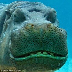 Say cheese! Smiley, happy animals greet the New Year with a grin | Mail Online