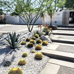 Lately, we've been doing landscape design for clients and we are loving it! #desert #desertlife #palmdesert